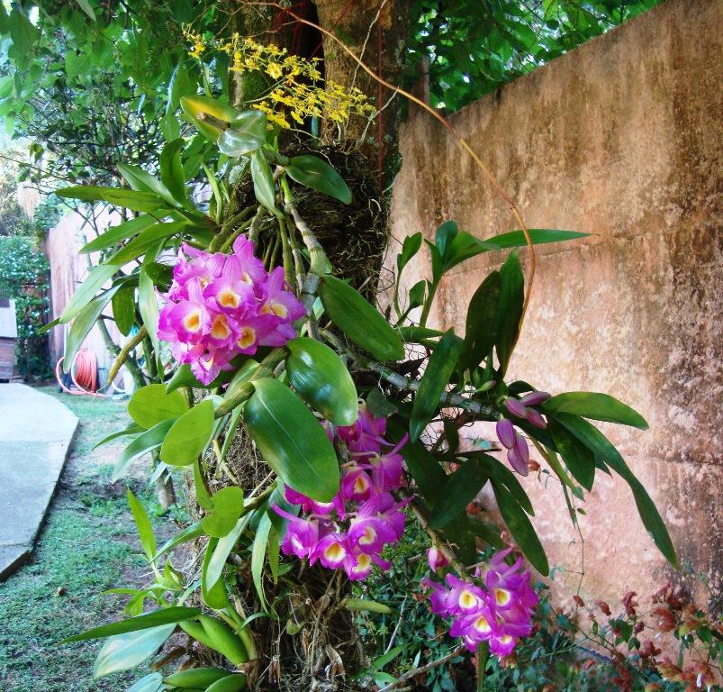 Orquideas no jardim by JFC